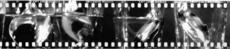 perpeuum_film